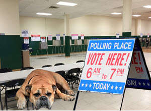 dogdayelection 3