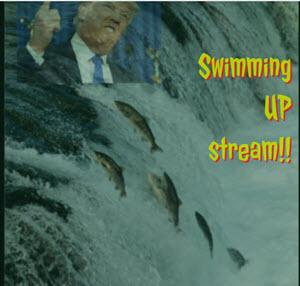 SWIM UP STREAM